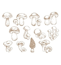Edible mushrooms sketch drawing icons vector