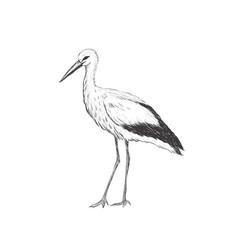 Stork sketch vector