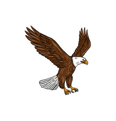 bald eagle flying drawing vector image vector image