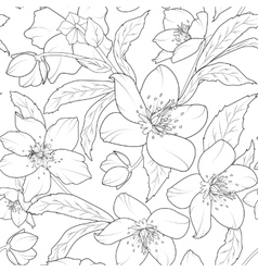 Christmas winter rose hellebore floral pattern vector image