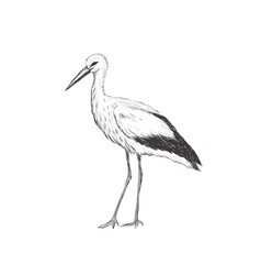 stork sketch vector image