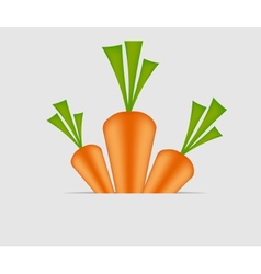 Sweet tasty carrot vector