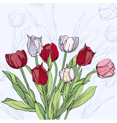 Background with claret and white tulips vector