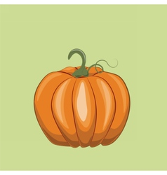 Fresh Pumpkin on green vector image vector image