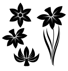 narcissus set vector image