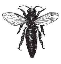 Queen bee vintage vector
