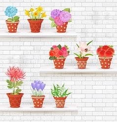 shabby chic brick wall with lovely flowers in pots vector image vector image
