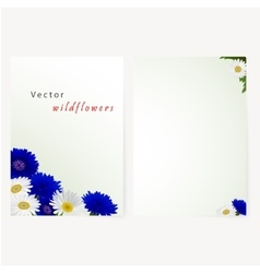 Template card with flowers camomile and vector