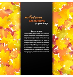 Autumn background with maple and other leaves vector