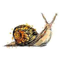 Colored hand drawing a snail vector