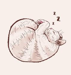 Cute sleeping cat vector
