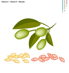 Green olives with vitamin a e and minerals vector