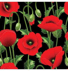 Poppies and green leaves vector