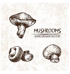 digital detailed mushrooms hand drawn vector image