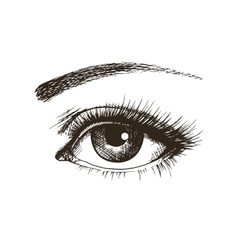 Hand-drawn beautiful female eye vector