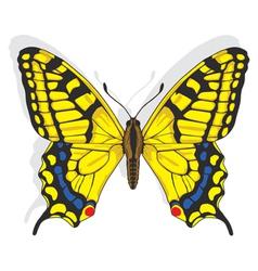 Swallowtail butterfly vector