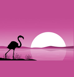 Collection flamingo scenery at sunset vector