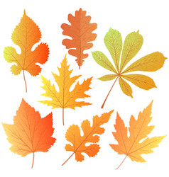 a set of autumn leaves element decor for the vector image