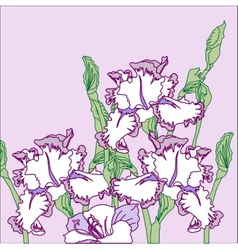 Background with three irises vector