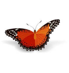 bright butterfly vector image vector image