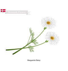 marguerite daisy the national flower of denmark vector image