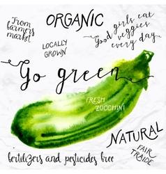 Watercolor zucchini vector