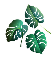 monstera leaves botanical exotic tropical plants vector image vector image