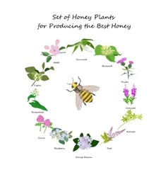 Planty set for produsing the best honey vector