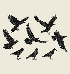 set of black ravens hand drawn inky birds vector image