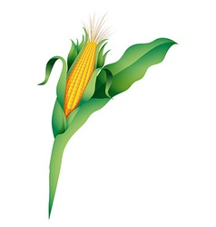 A corn vector image