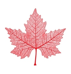 Red maple leaf isolated symbol of canada autumn vector