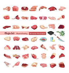 colored poultry and meat elements set vector image vector image