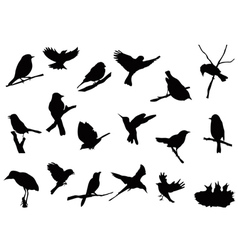 bird silhouettes collection vector image