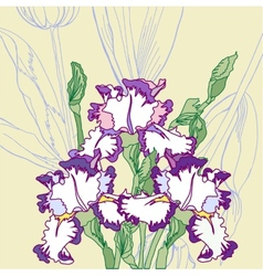 Background with white blue irises vector