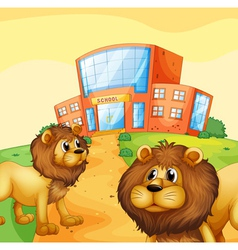 Two wild lions in front of a school building vector