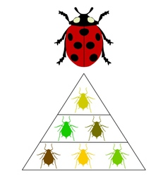Ladybird diet pyramid vector