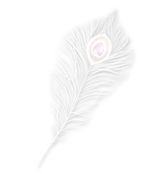 isolated white peacock feather EPS10 vector image