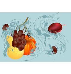Splash and fruit vector