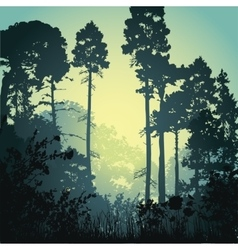 forest in the morning vector image
