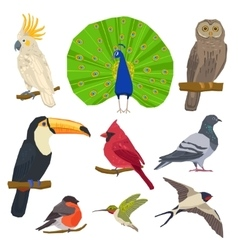 Bird Drawn Icon Set vector image