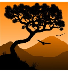 Mountain pine vector image