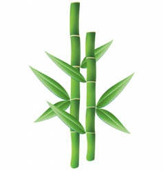 Bamboo branches vector