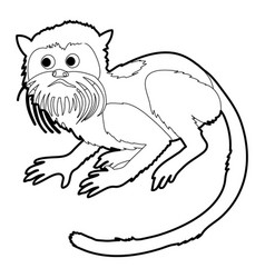 Imperial tamarin icon outline vector