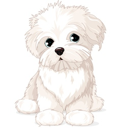 Maltese puppy dog vector