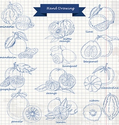 Set of citrus fruits on paper hand drawing sketch vector image vector image