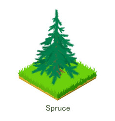 spruce icon isometric style vector image vector image