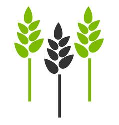 Wheat ears flat icon vector