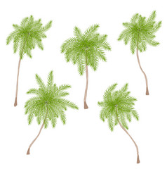 Set of stylized palm trees isolated on white vector