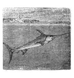 The sword fish vintage vector