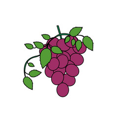 white background with colorful bunch of grapes vector image vector image